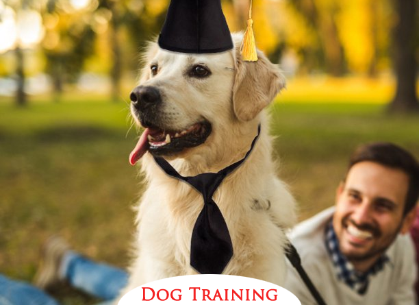 Dog Training Rules : 4 important Rules to adopt