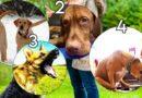 4 behaviours dog training