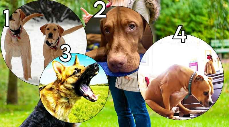4 behaviours dog training